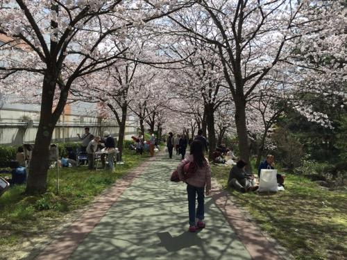 セブンスター石手店の隣にある石手川沿いの桜並木を歩く娘