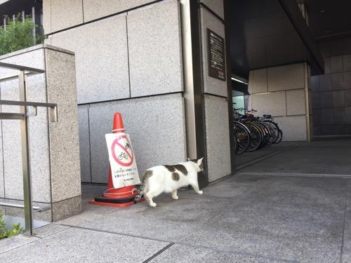 岡山県立図書館駐輪場前のスロープから立ち去る白くて丸々した猫の後ろ姿