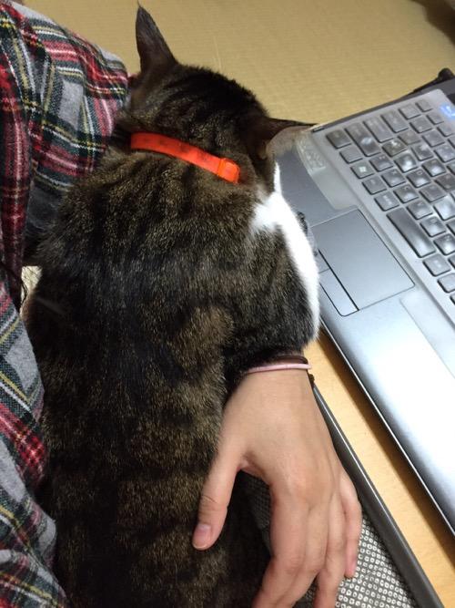 妻の左腕で抱っこされる猫-ゆきお