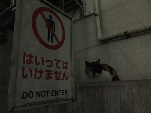 夜の桜田公園の茶色い猫-はいってはいけませんの看板前