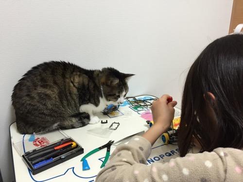ミニ四駆「スーパーアバンテ ブラックスペシャル」を組み立てる娘の様子を机の上で眺める猫-ゆきお