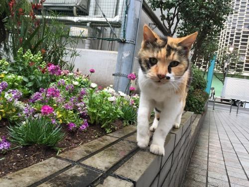 花壇にひょいと登って近づいてくる猫