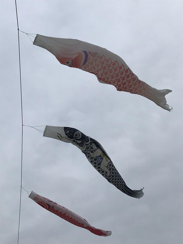 鯉のぼりと金太郎