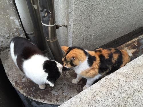 キスするように顔を近づけて臭いを嗅ぐ野良猫-桜田公園にて