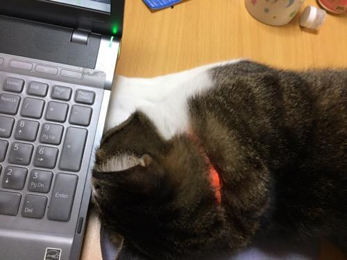 ノートパソコンSONY VAIOの下に前脚を差し込み、耳かきを探す猫-ゆきお