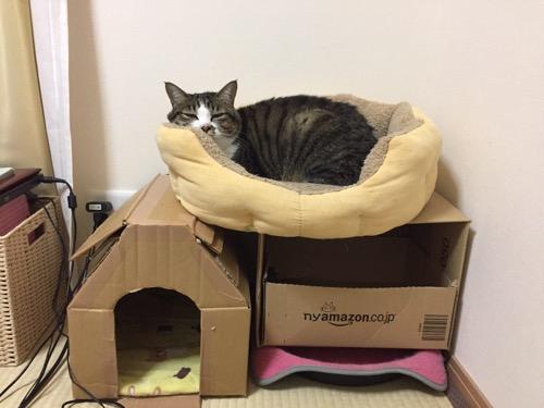 ダンボールハウスの上にある猫ベッドの中から見つめてくる猫-ゆきおの