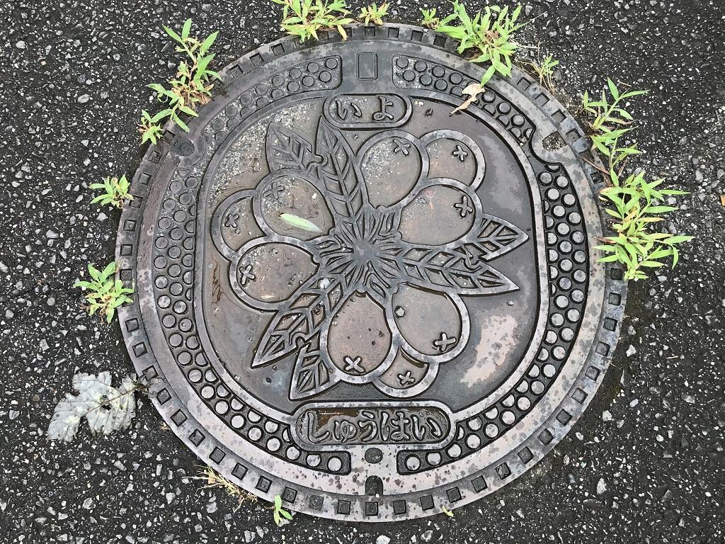 愛媛県伊予市のマンホールの蓋「いよ しゅうはい」