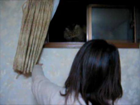 妻が飼い猫-ひめを部屋の窓から迎え入れる写真