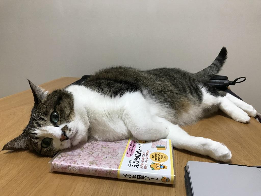 2021年版えひめ県民ノートを枕にする猫-ゆきお