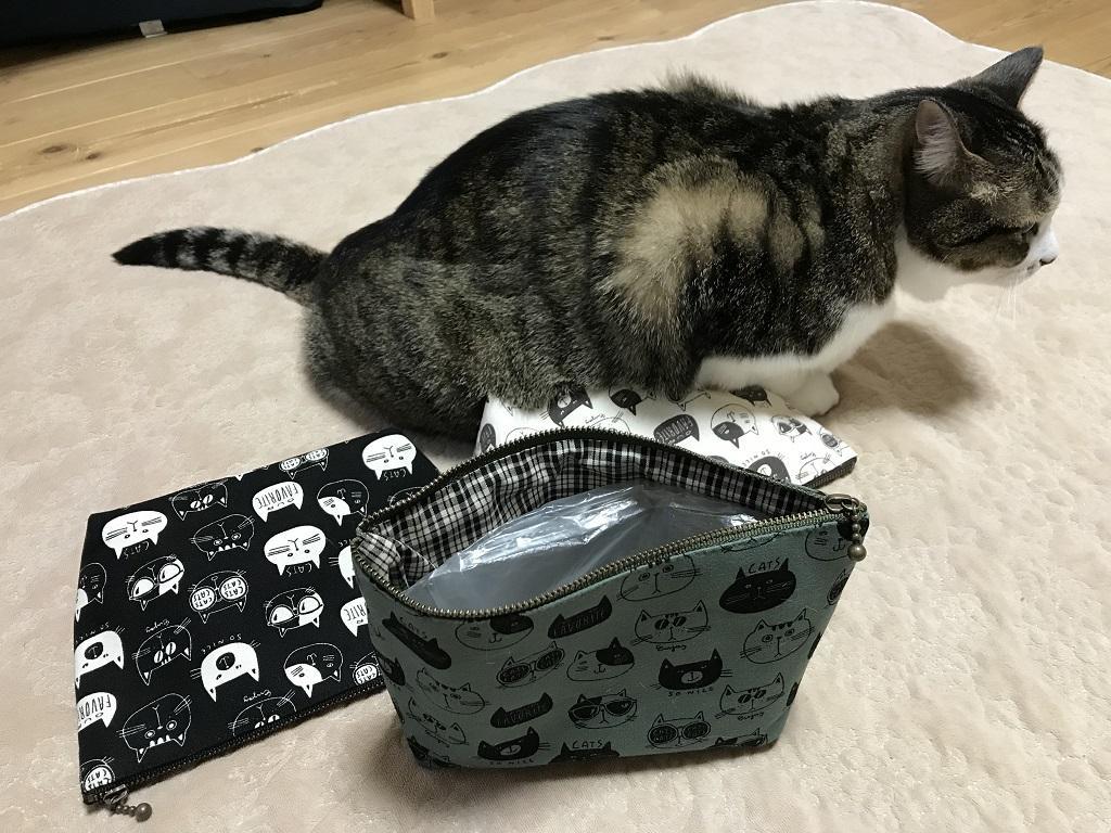 チャックの口が開いた緑色の猫柄ポーチ(てふてふ)と猫-ゆきお