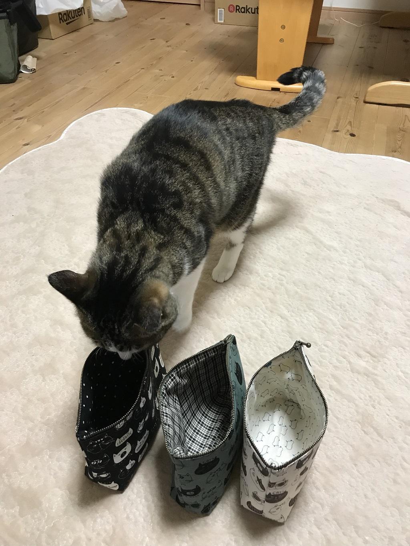 チャックの口が開いた黒色の猫柄ポーチ(てふてふ)に近づく猫-ゆきお