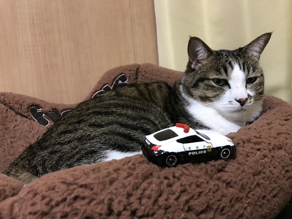 トミカ No.61 日産 フェアレディZ NISMO パトロールカーを見つめる猫-ゆきお