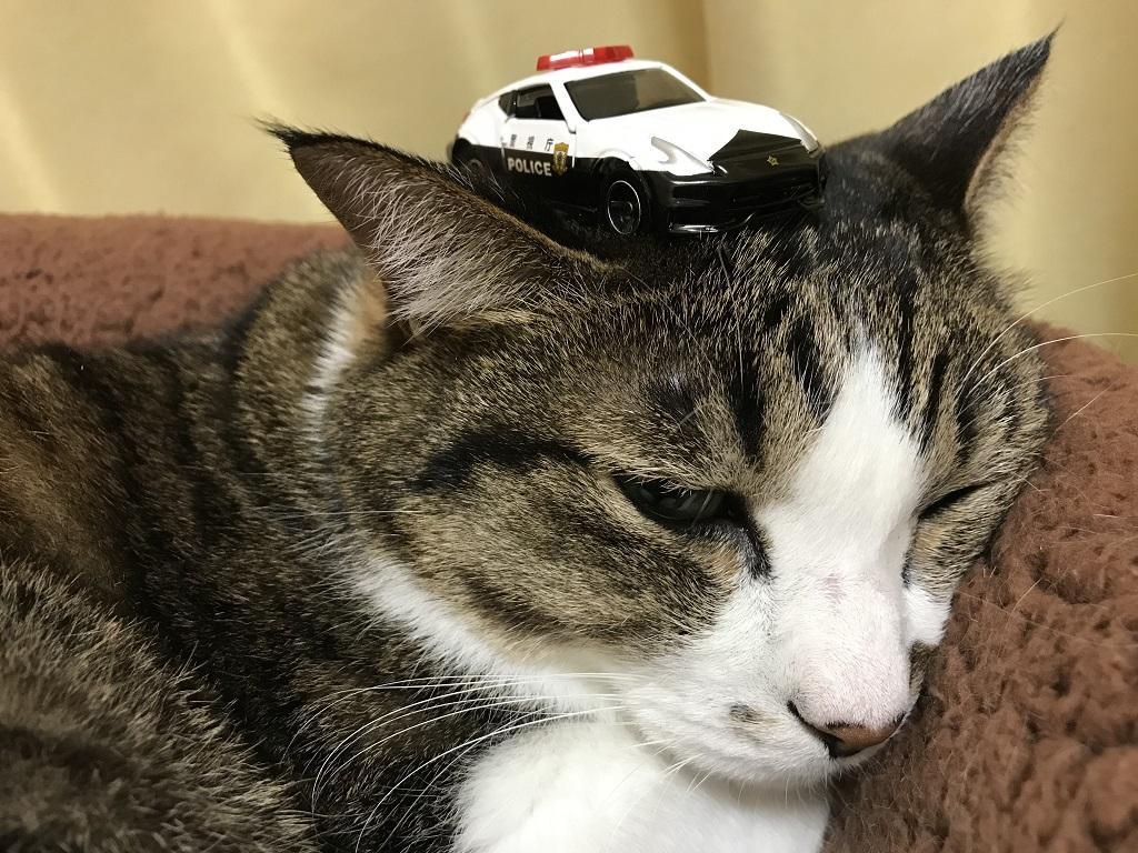 トミカ No.61 日産 フェアレディZ NISMO パトロールカーを頭にのせた猫-ゆきお