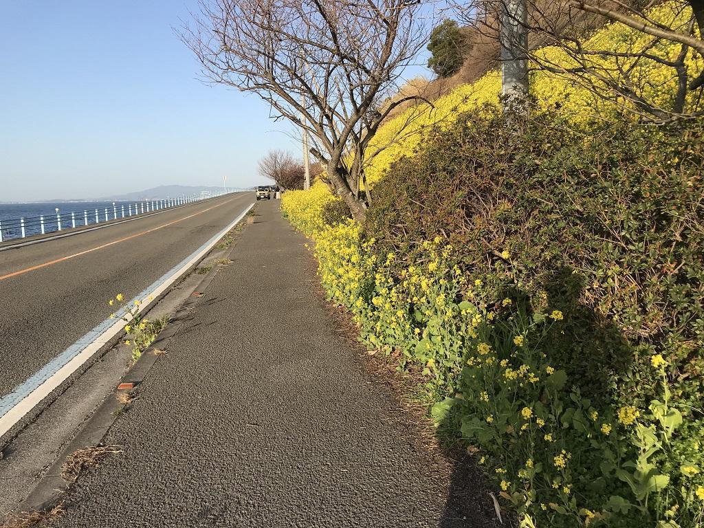 愛媛県伊予市双海町 閏住の菜の花と夫婦の影法師