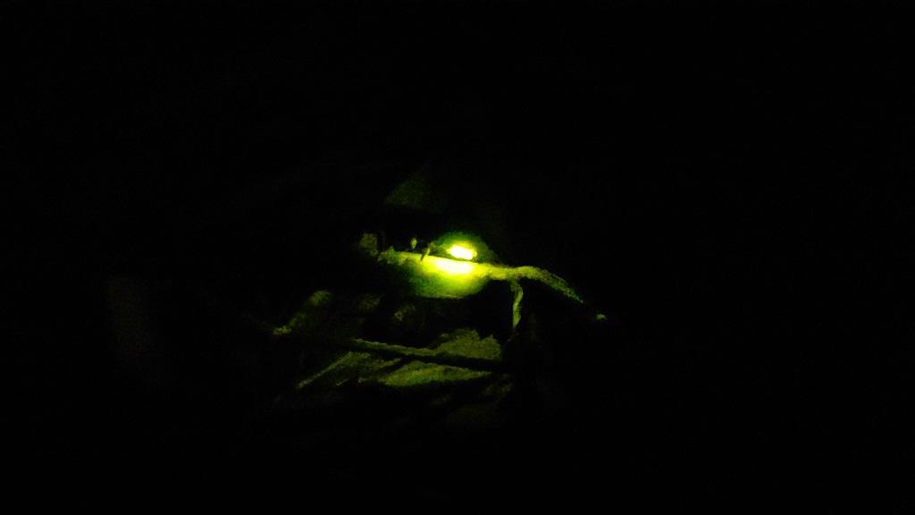 愛媛県伊予市中山町 野中地区 蛍の光
