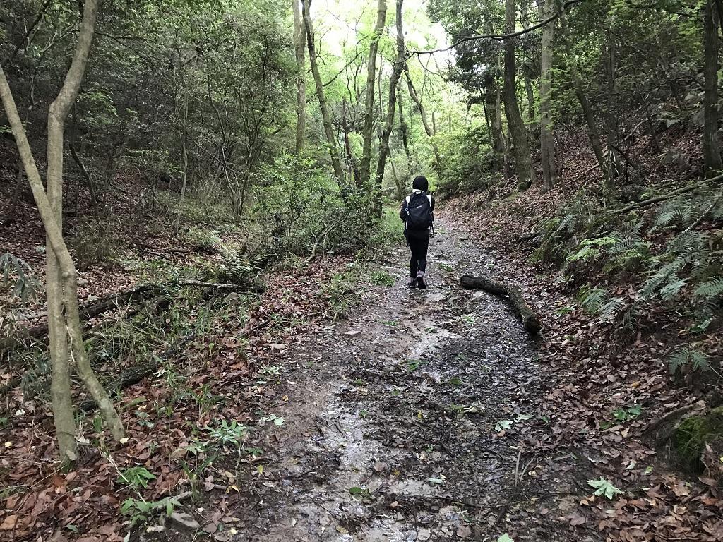 淡路ヶ峠 砂防ダム奥ルート ゆったりマドンナコース 雨上がり後に濡れた道。先を歩く高校1年生の娘